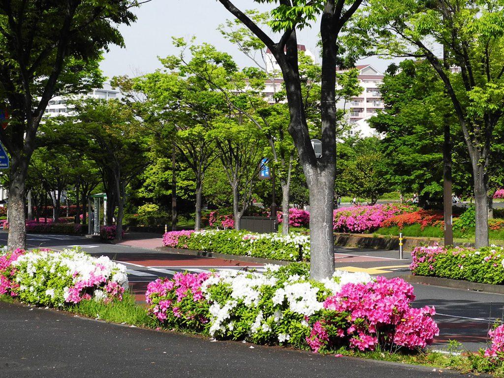 画像 大島小松川公園のツツジ