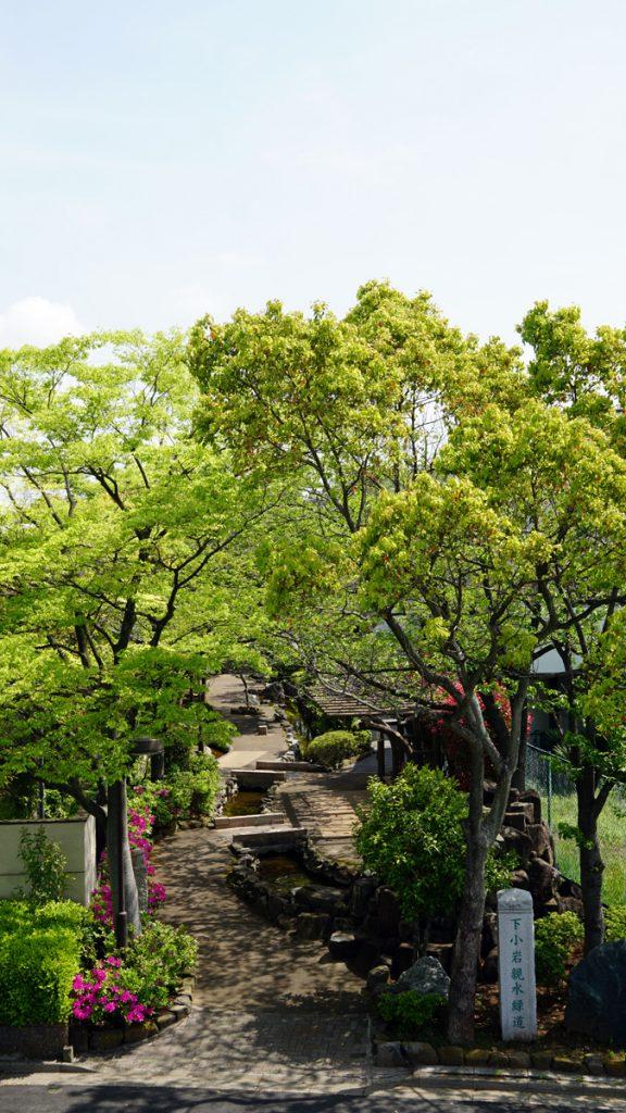 画像 新中川からみた風景