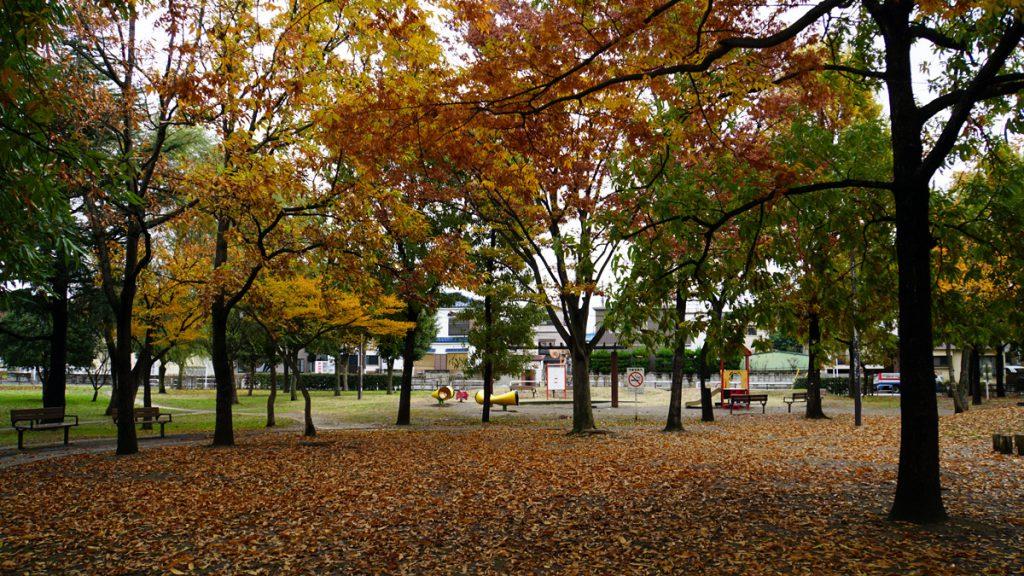 都立篠崎公園 秋の風景