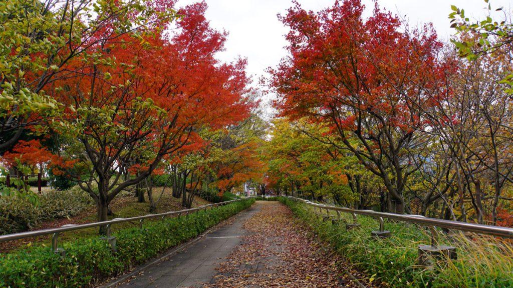 大島小松川公園 秋の風景
