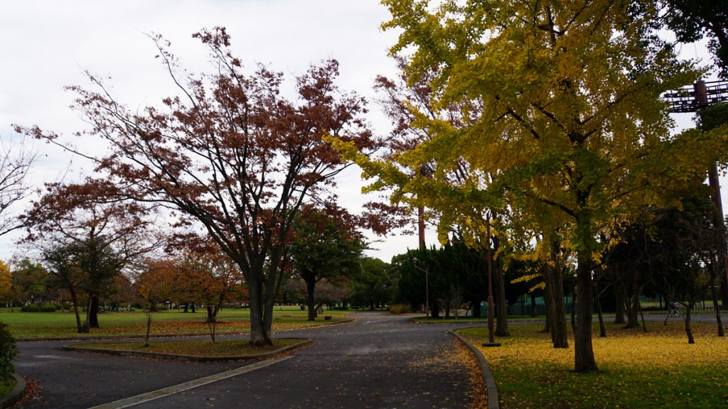 都立篠崎公園 秋の風景(園内)