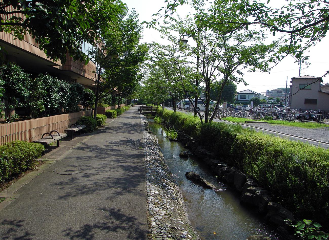 画像 興農親水緑道の夏の風景