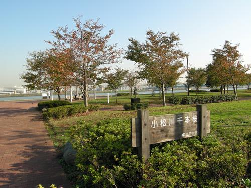 画像 小松川千本桜 秋の風景