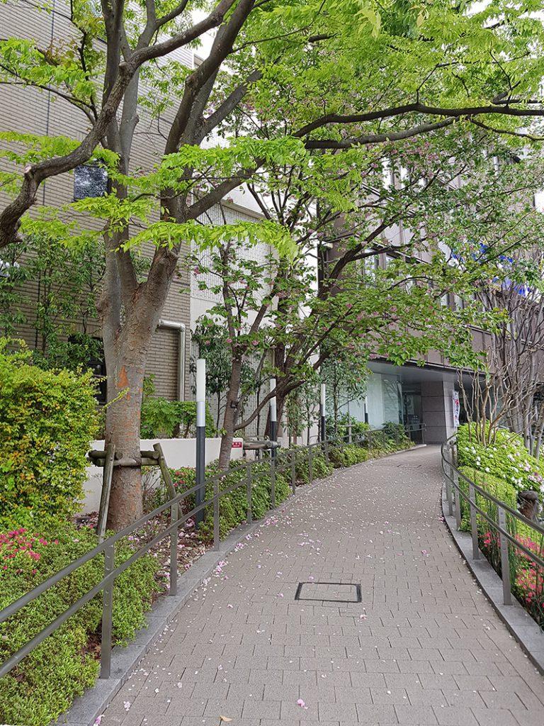 画像 江戸川区役所のスロープ