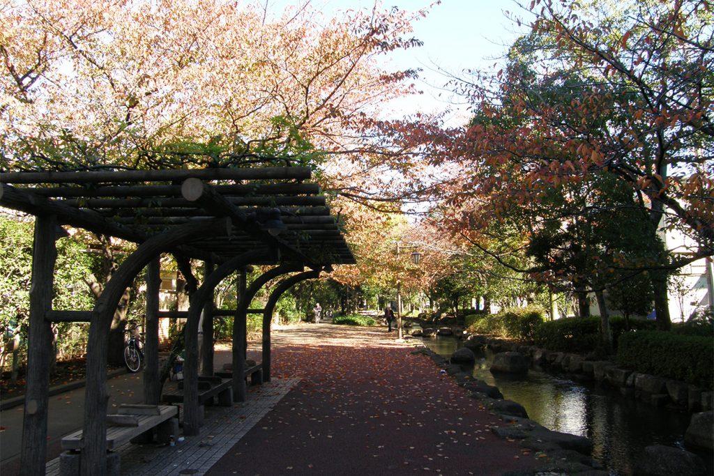 画像 小松川境川親水公園 秋の風景