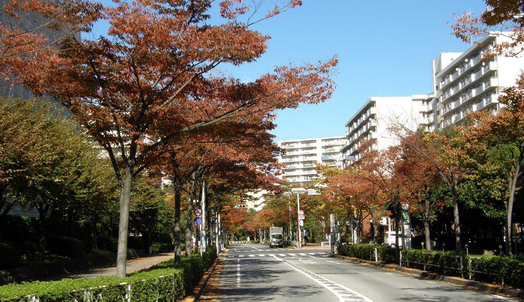 画像 清新町の秋の風景