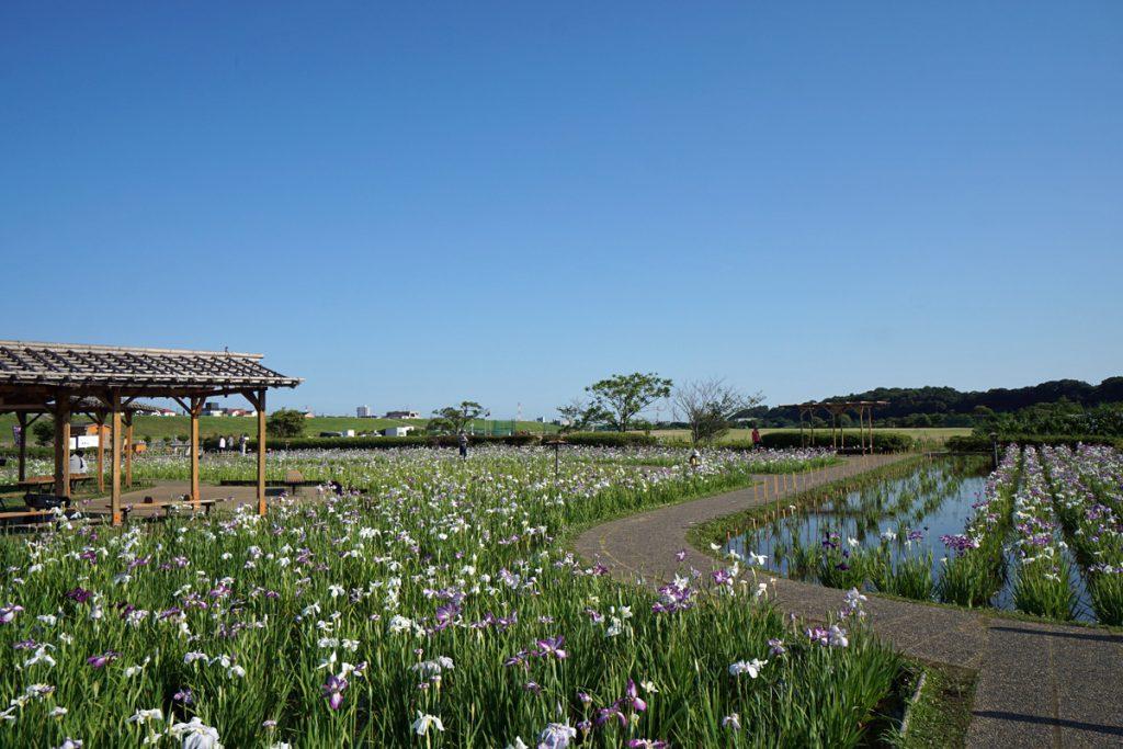 画像 小岩菖蒲園の東屋