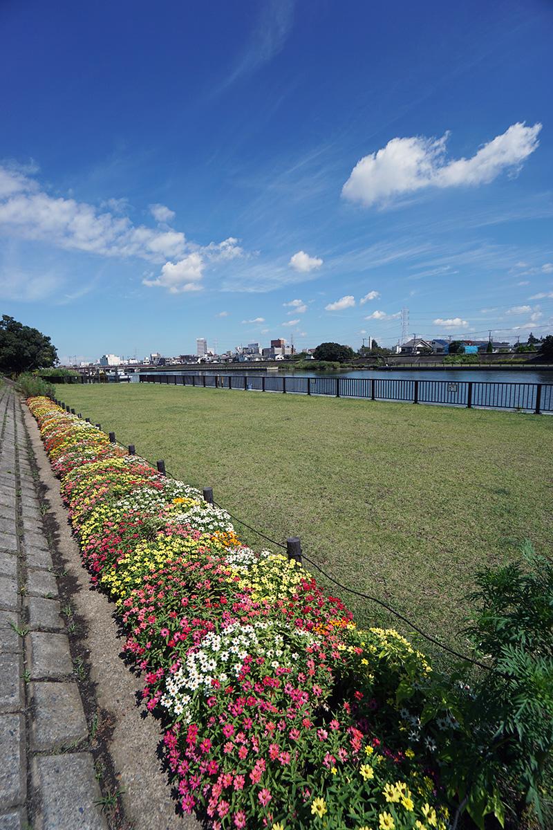 画像 新中川の河川敷