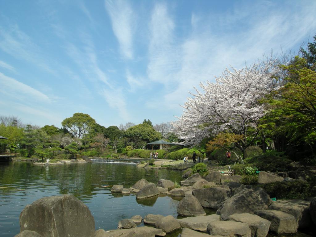 平成庭園と桜