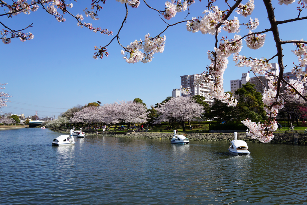 画像 新左近川親水公園の桜2