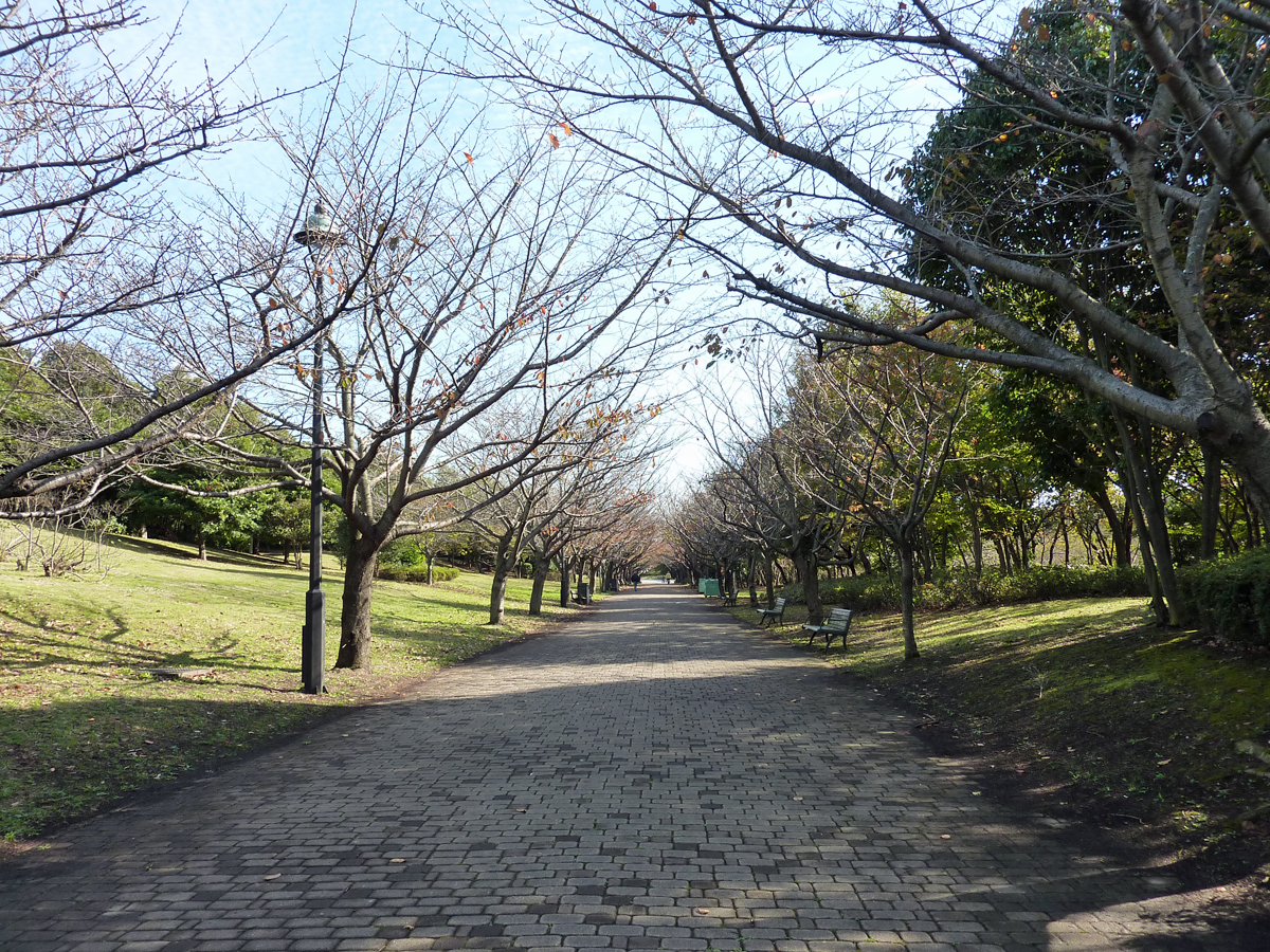 葛西臨海公園 秋の桜並木