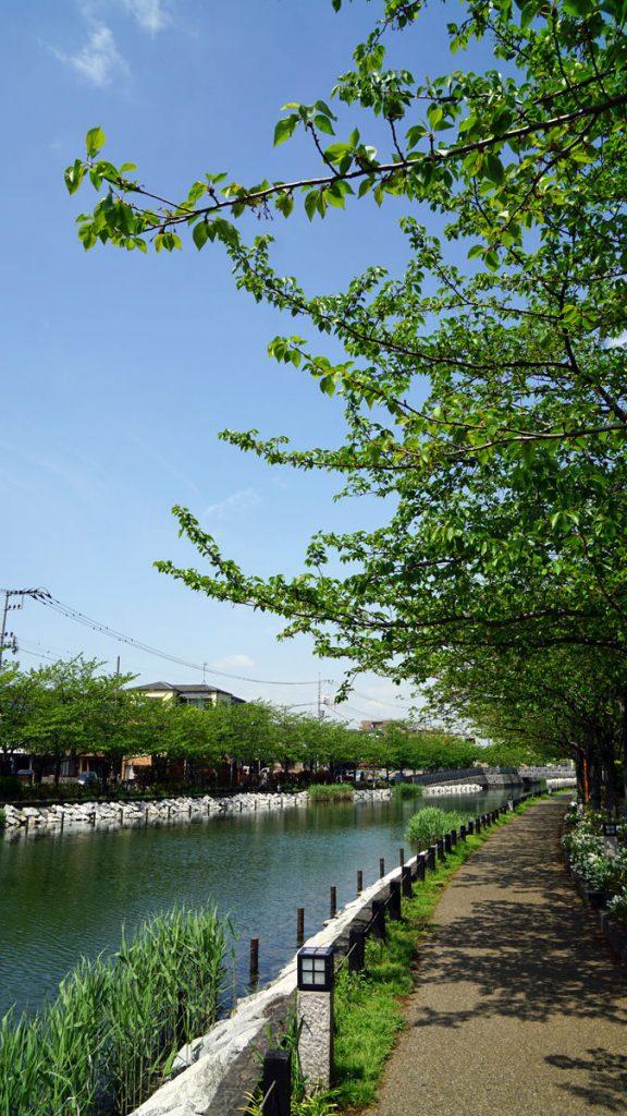 新川 春の風景