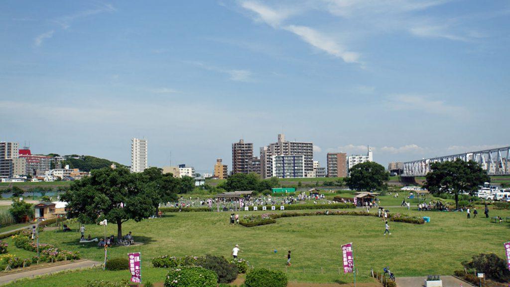 画像 小岩菖蒲園の全景