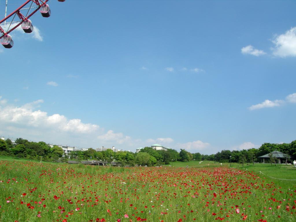 画像 葛西臨海公園 観覧車南側のポピー