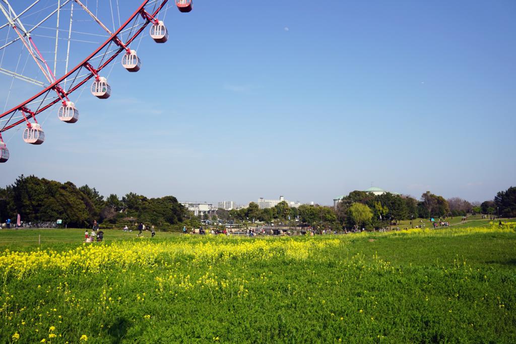 画像 葛西臨海公園 観覧車と菜の花
