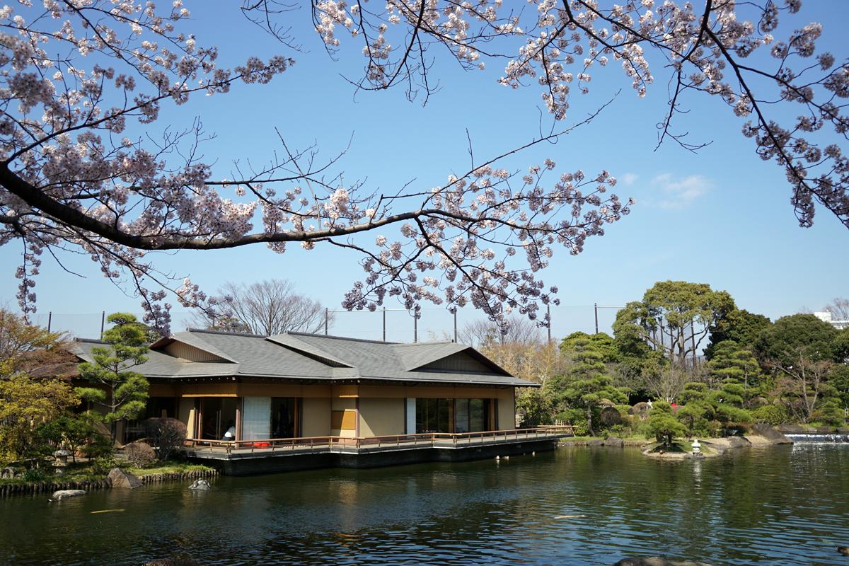 画像 平成庭園の桜