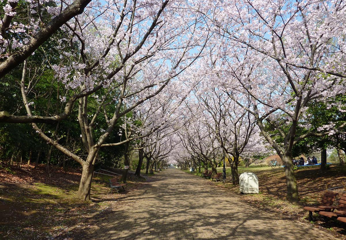 葛西臨海公園 桜並木