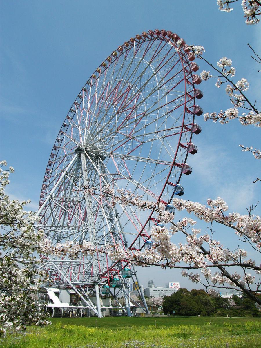 画像 観覧車と桜