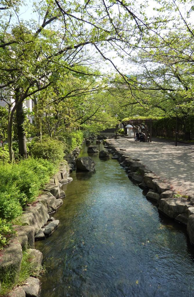 画像 小松川境川親水公園 夏の風景