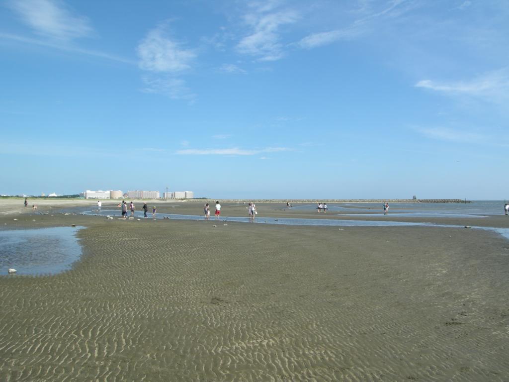 画僧 葛西海浜公園の海岸