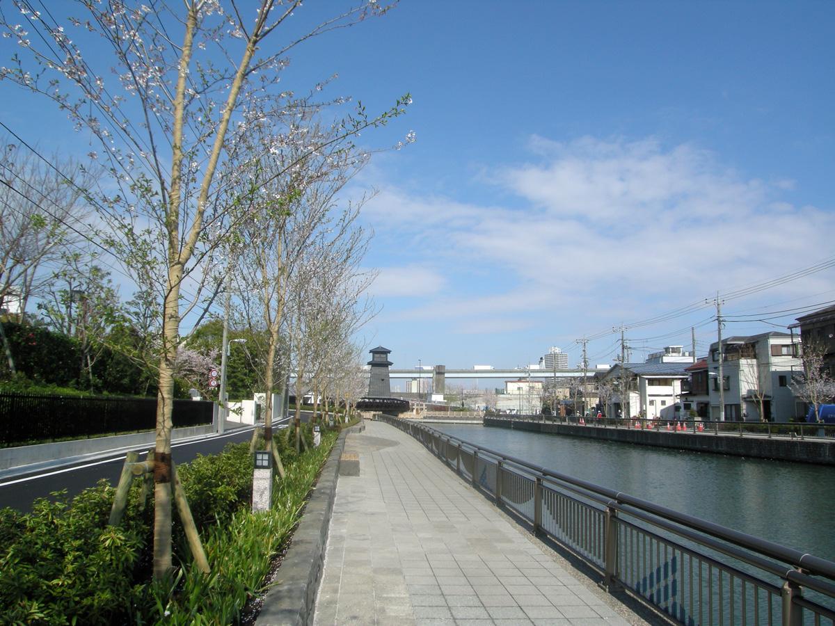 画像 新川の桜