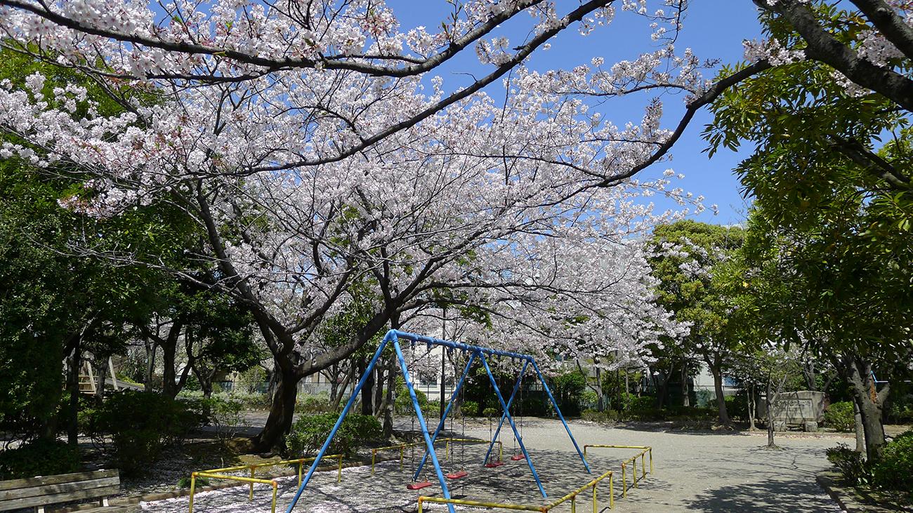 平井さくら公園の桜
