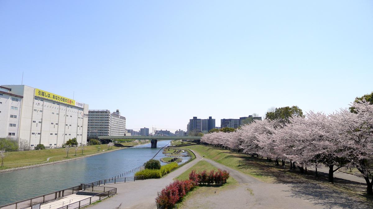 画像 旧中川の桜
