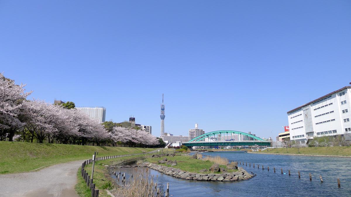 画像 旧中川の桜と東京スカイツリー