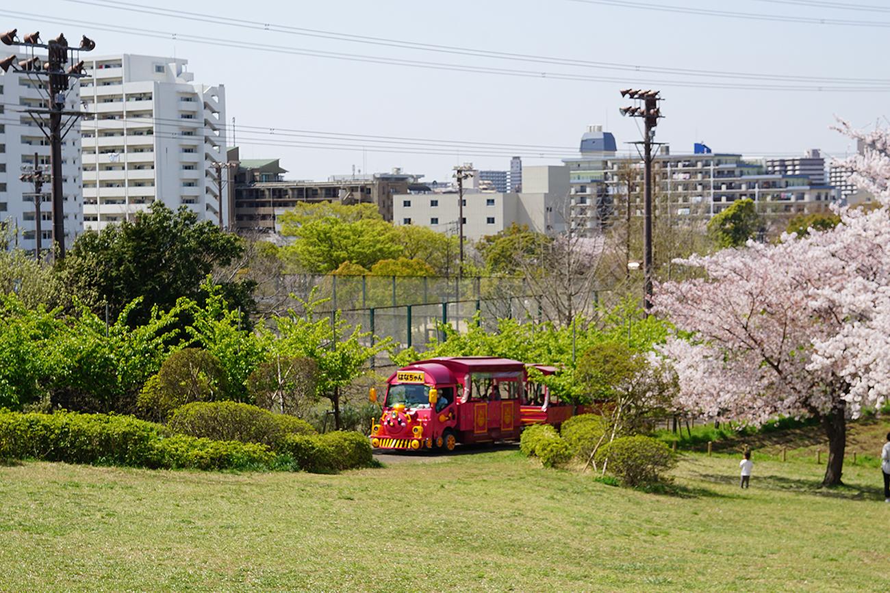 画像 なぎさ公園の桜とパノラマシャトル