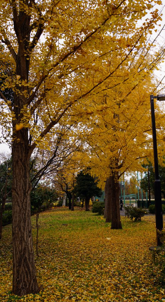 篠崎公園 秋の風景