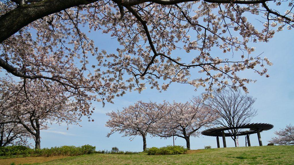 画像 なぎさ公園の展望の丘