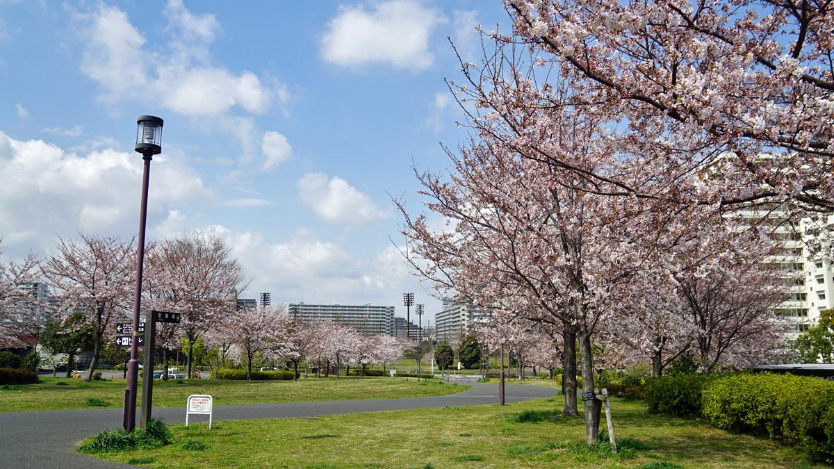 大島・小松川公園の桜