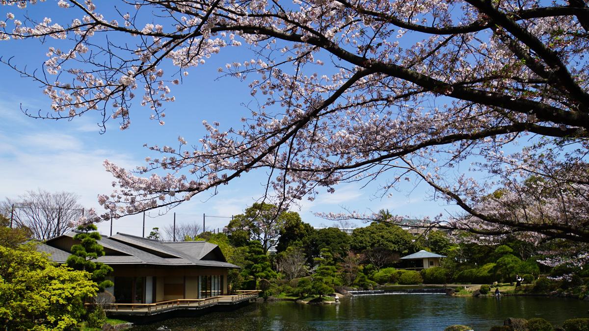 画像 行船公園 平成庭園の桜