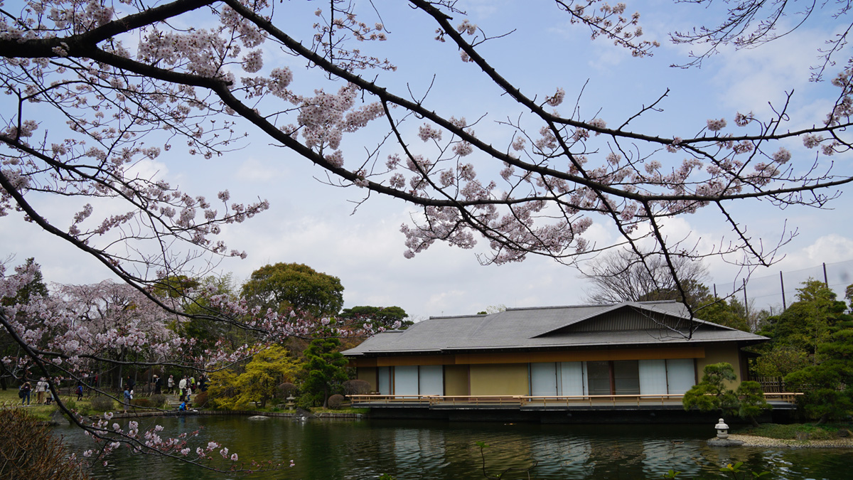 平成庭園の桜