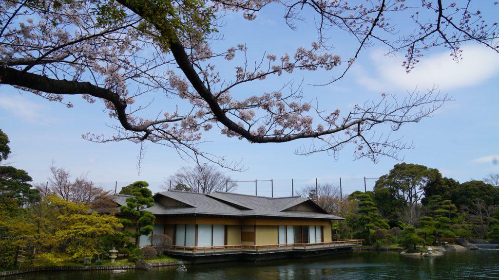 画像 平成庭園 源心庵と桜