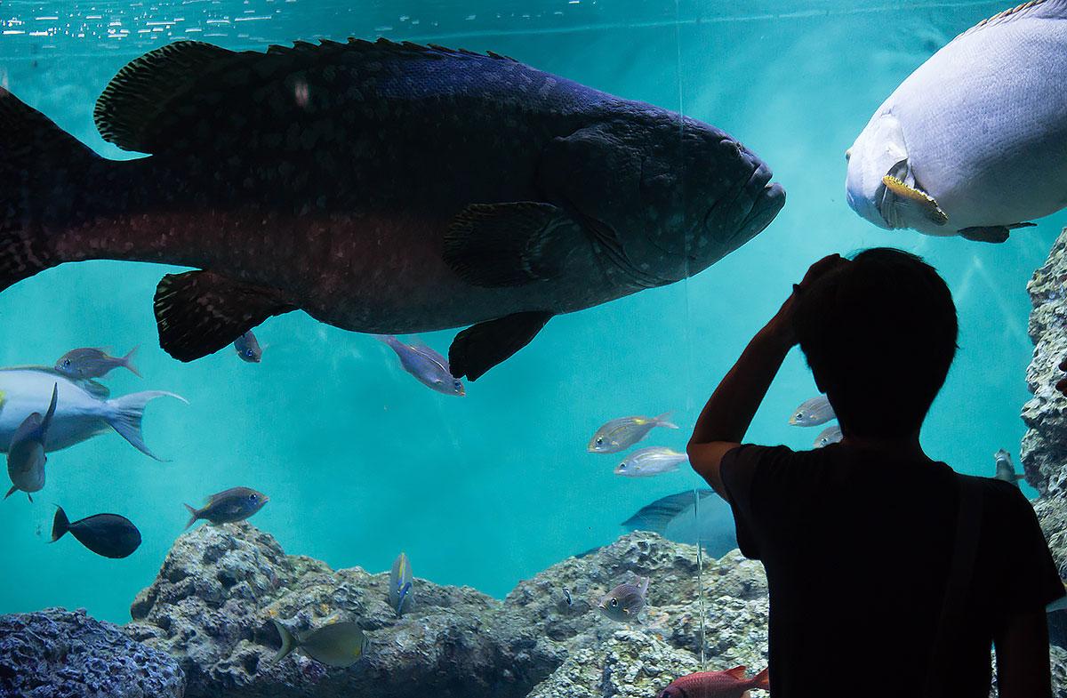 画像 葛西臨海水族園の魚たち4
