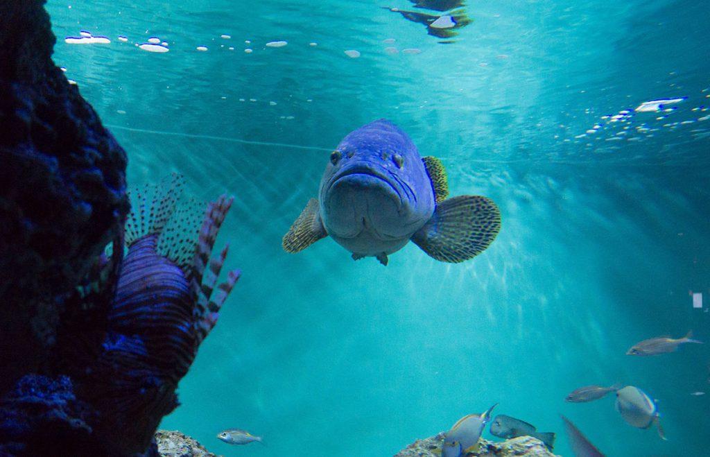画像 葛西臨海水族園のタマカイ