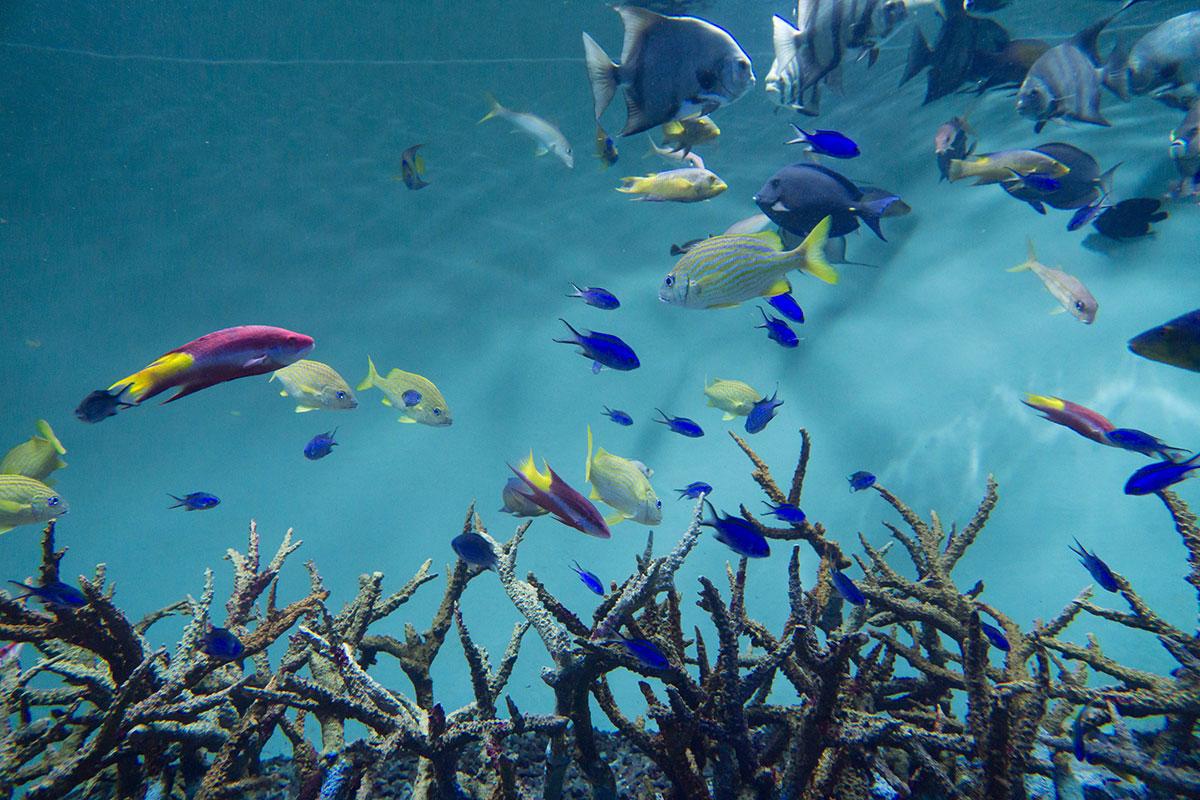 画像 葛西臨海水族園の魚たち6