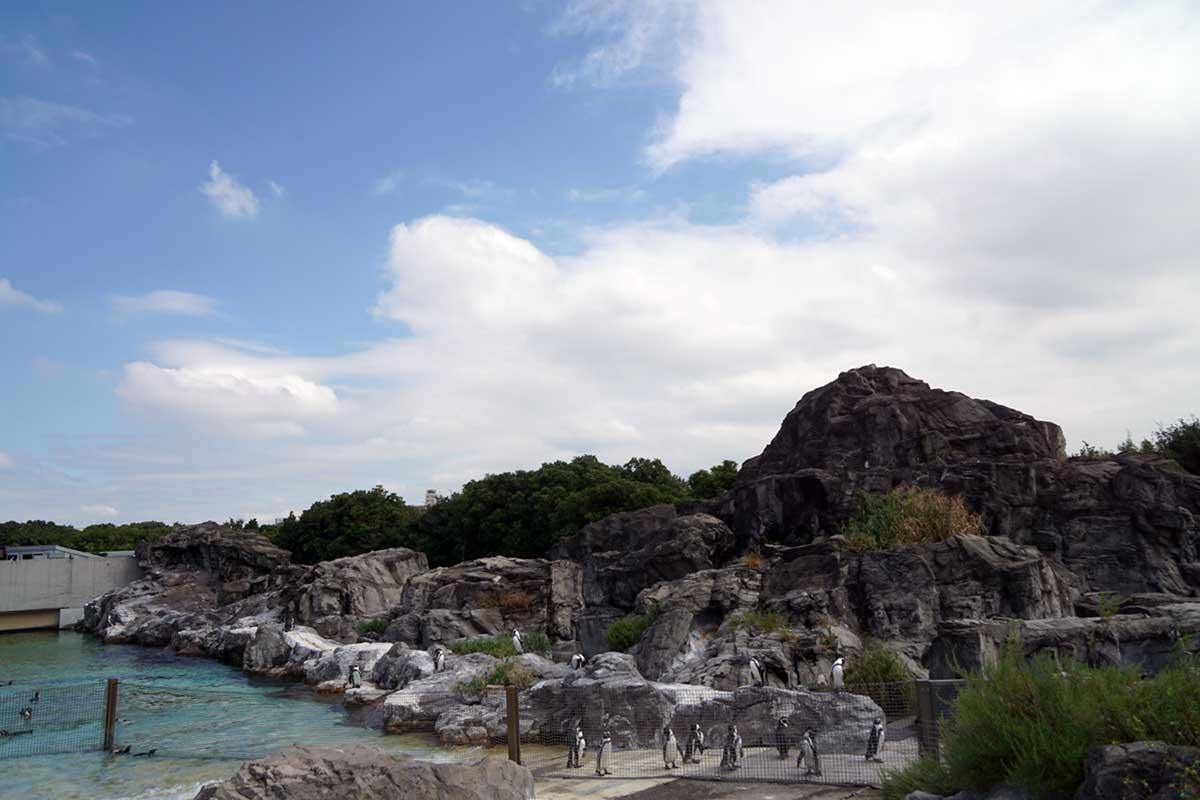 画像 葛西臨海水族園のペンギン1