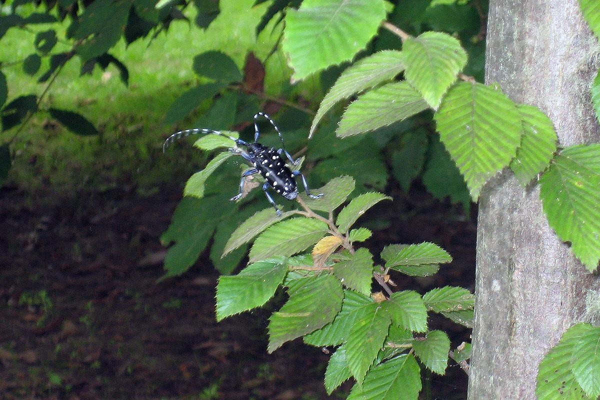 画像 水辺の自然で見つけた昆虫2