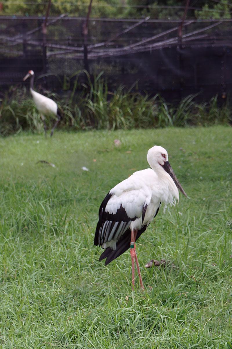 画像 水辺の自然の鳥
