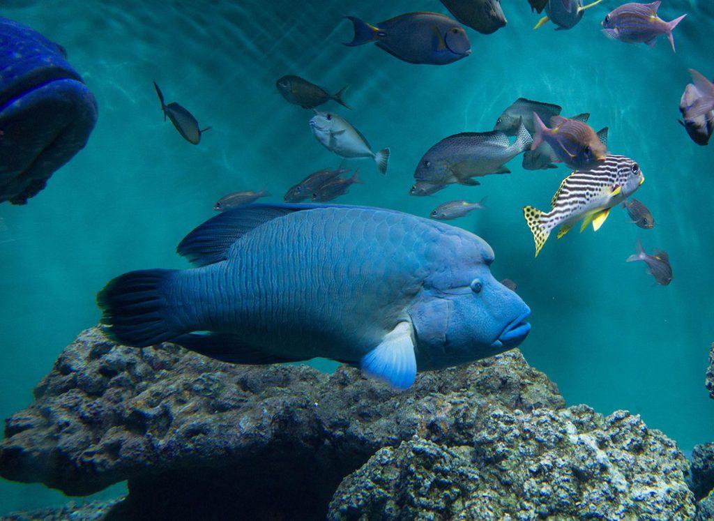 画像 葛西臨海水族園のメガネモチウオ