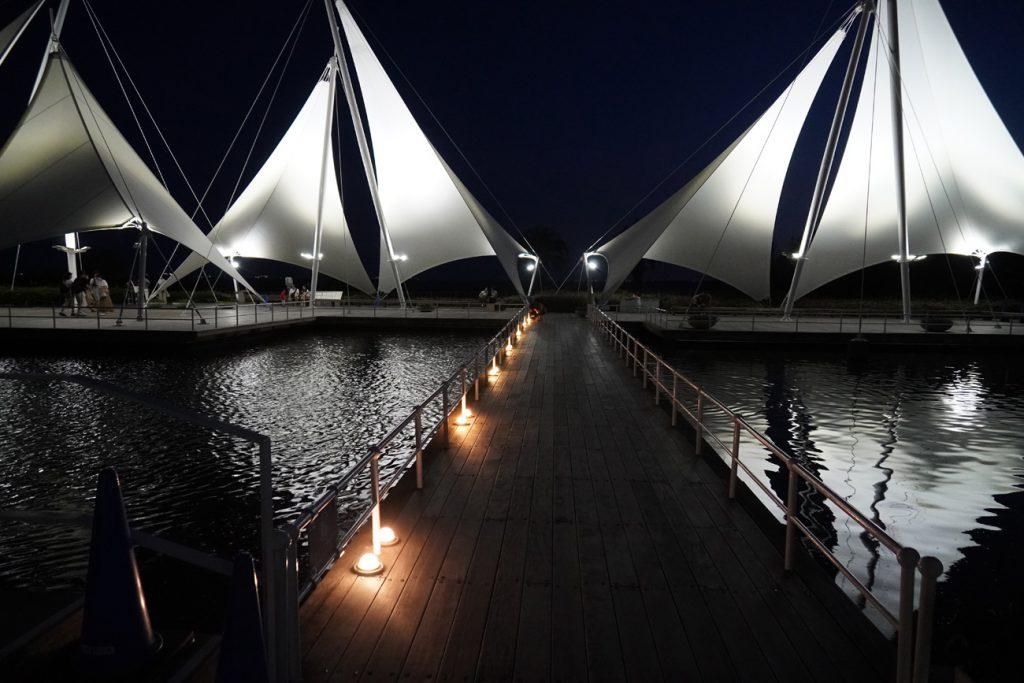 画像 夜の葛西臨海水族園
