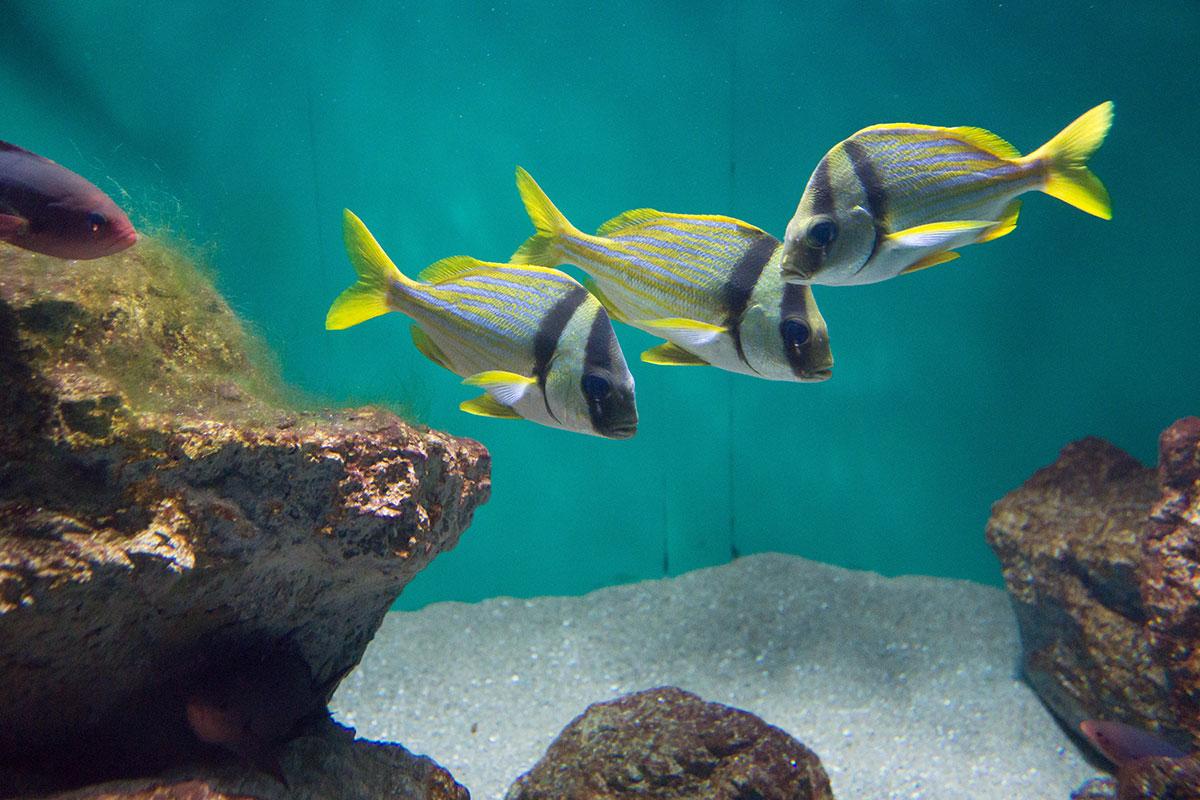 画像 葛西臨海水族園の魚たち5