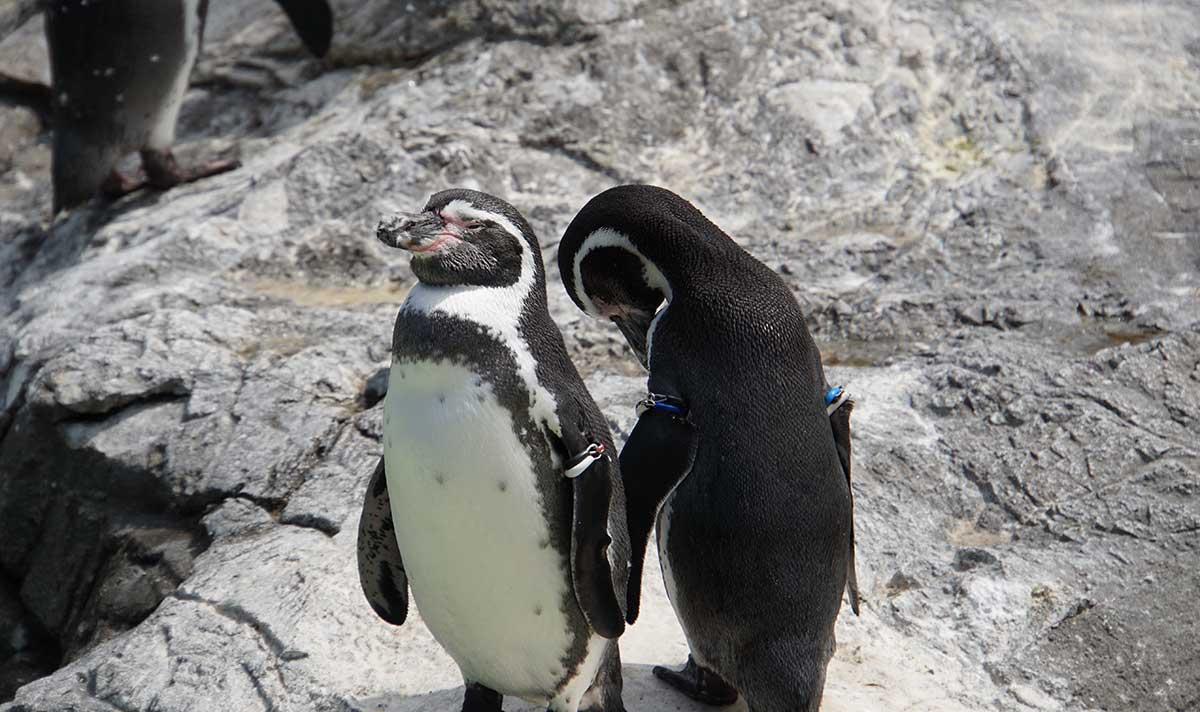 画像 葛西臨海水族園のペンギン