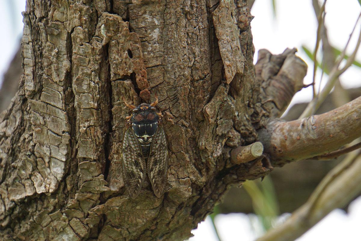 画像 水辺の自然で見つけた昆虫