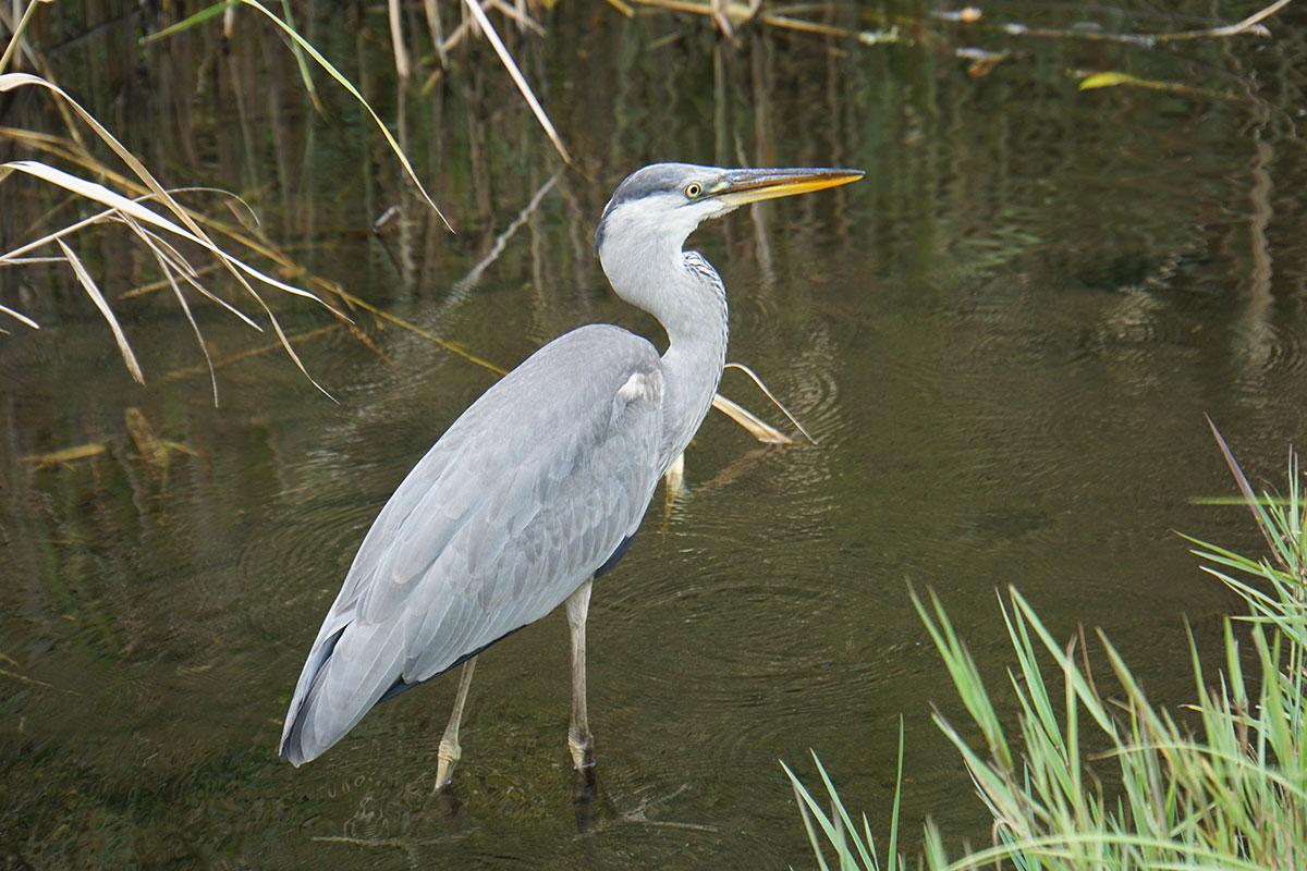 画像 水辺の自然の鳥2
