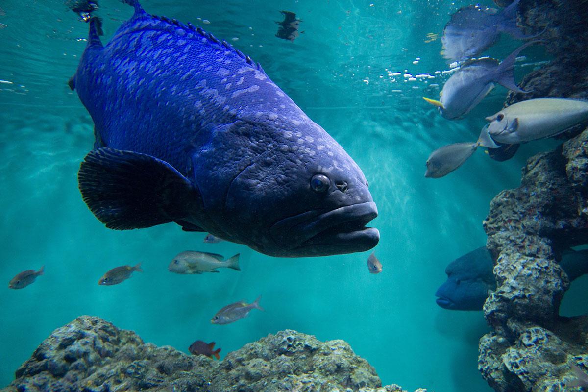 画像 葛西臨海水族園の魚たち2