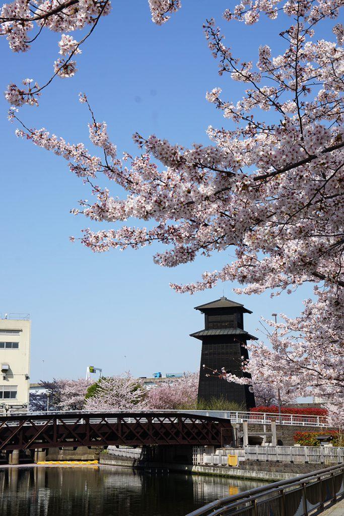 画像 新川西水門広場の火の見やぐらと桜