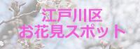 画像 江戸川区のお花見スポット
